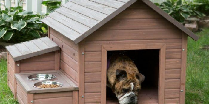 Собачья будка своими руками: фото